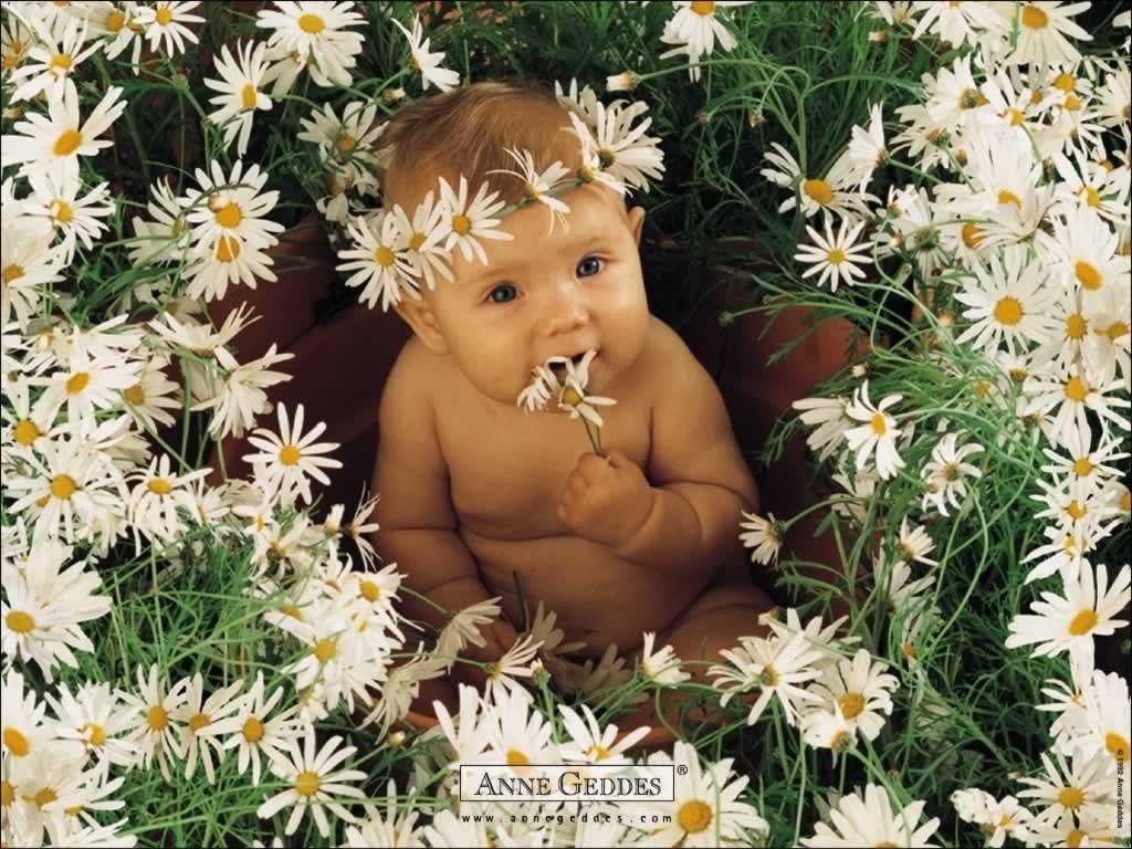cute-baby-wallpaper-angel-baby-wallpaper-bady-in-flowerbed_1024x768 - HD Wallpaper
