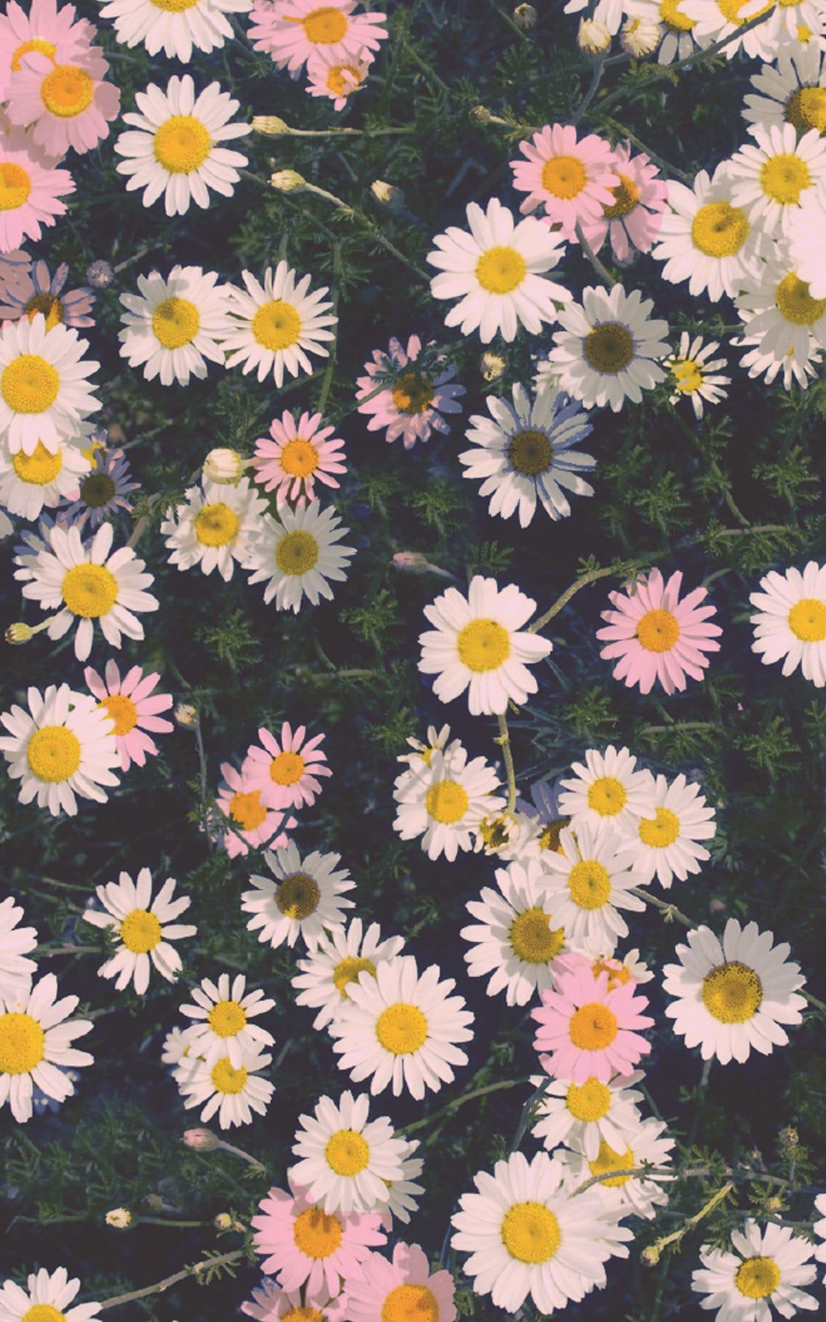 Flowers Image, Flowers Wallpaper iPhone