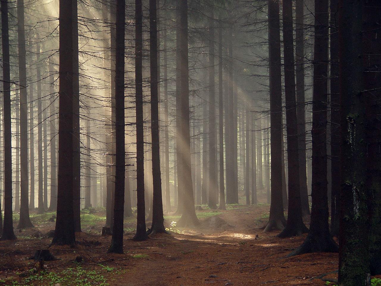 Cool desktop background, forest images