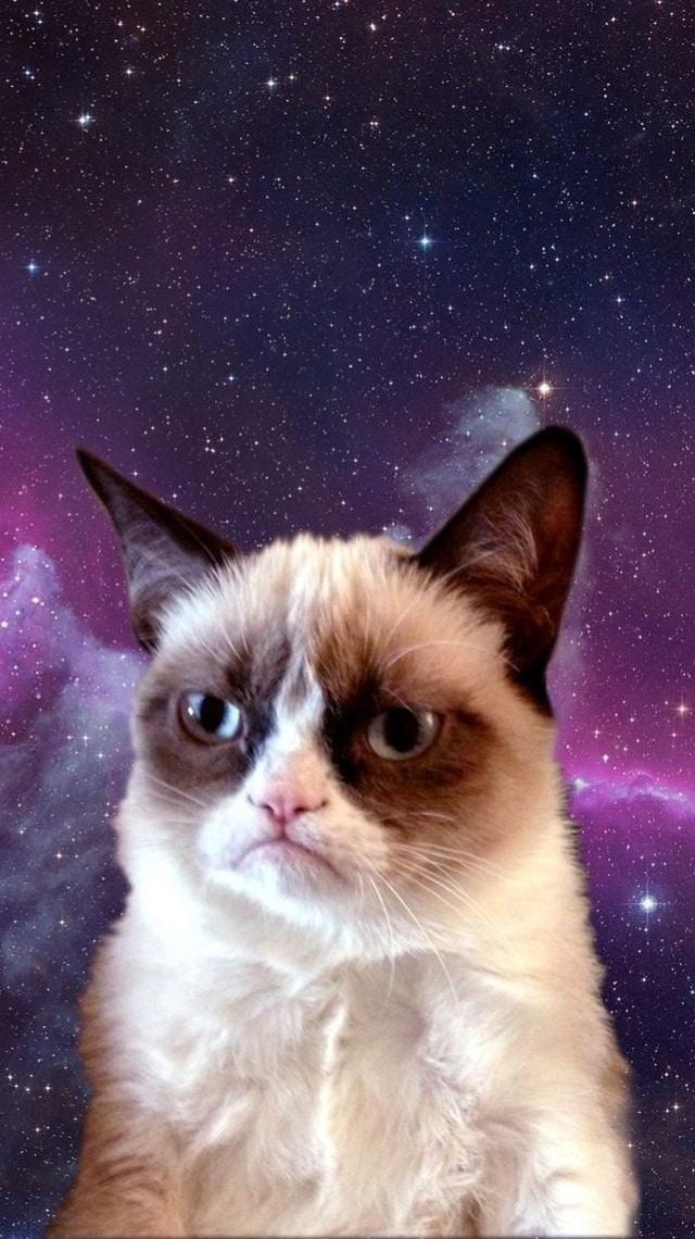 Cat wallpaper, space image