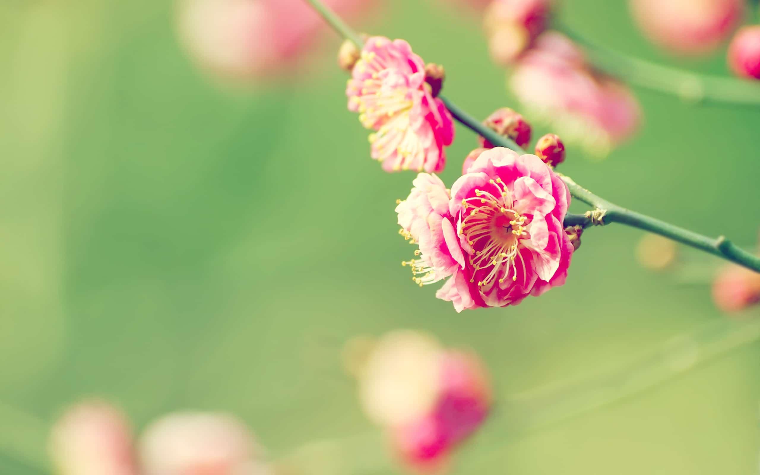 Flowers Desktop Bakgrounds